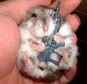 180px-Server_Hamster